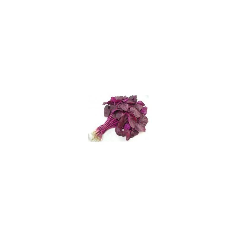 Foxtail Amaranthus Seeds