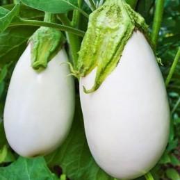Brinjal Seeds(White)