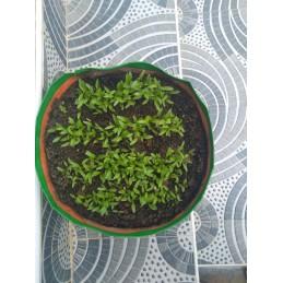 """HDPE GROW BAG 09"""" X 09"""""""