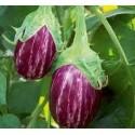 Brinjal Seeds(Purple with Line)
