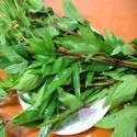 Green Gongura Seeds